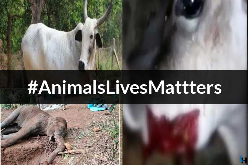 The Limits of Cruelty Have Been Crossed Again, After the Pregnant ...